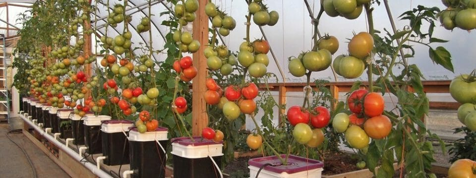 adventist-academy-introduces-innovative-farming-into-its-curriculum